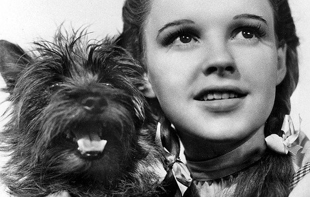 Wizard Of Oz Dog Name